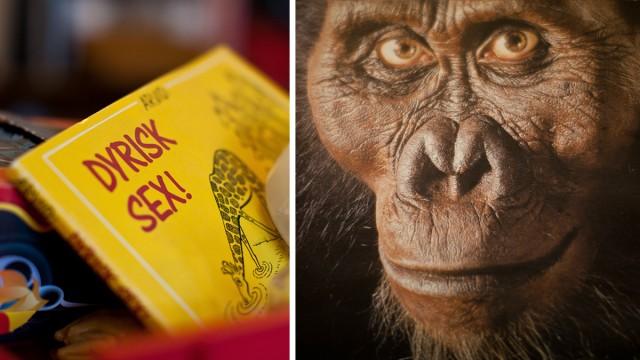 Ei bok og en ape. (Foto: Rashid Akrim, NRK P3)